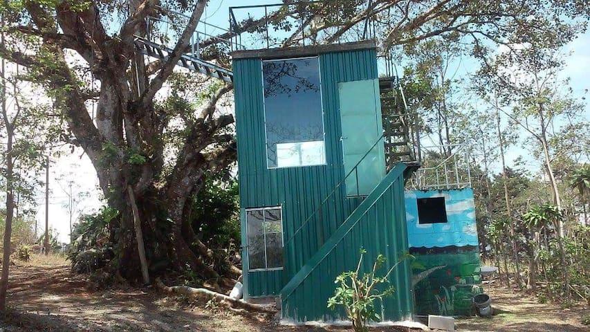 Our little higuerón tree house - Angeles Sur