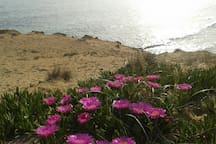 spiaggia isola di pazze