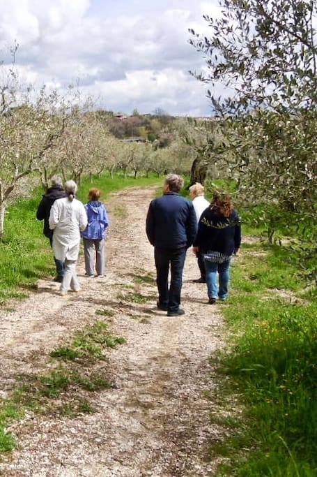 Strolling through an Olive Grove
