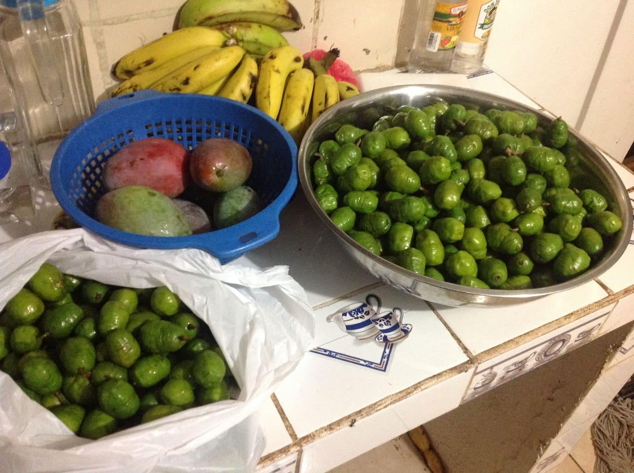 'Finca Don Mincho' fruits galore...
