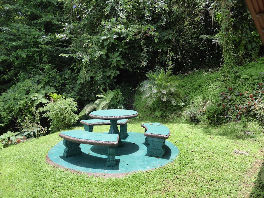 Picnic Table at the edge of the Rain Forest