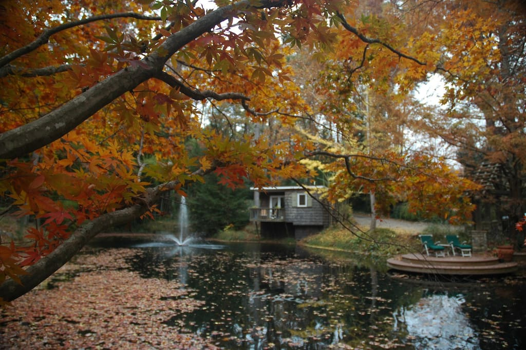 Fall is spectacular on Zen Pond.