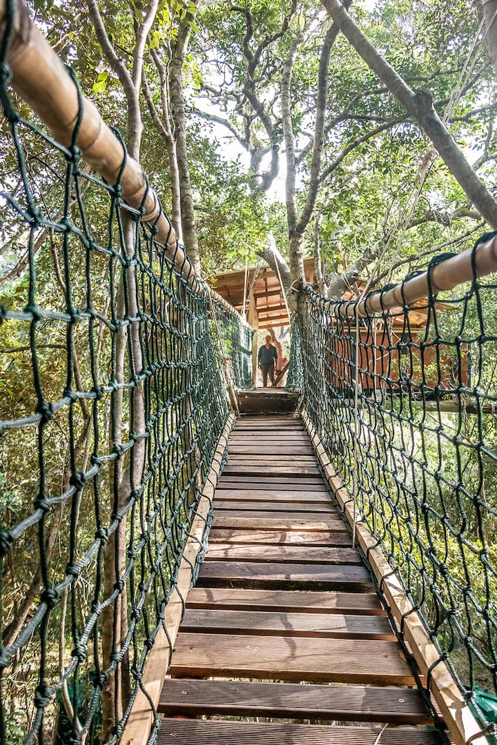 Treetop Tented Camp - a remote forest retreat