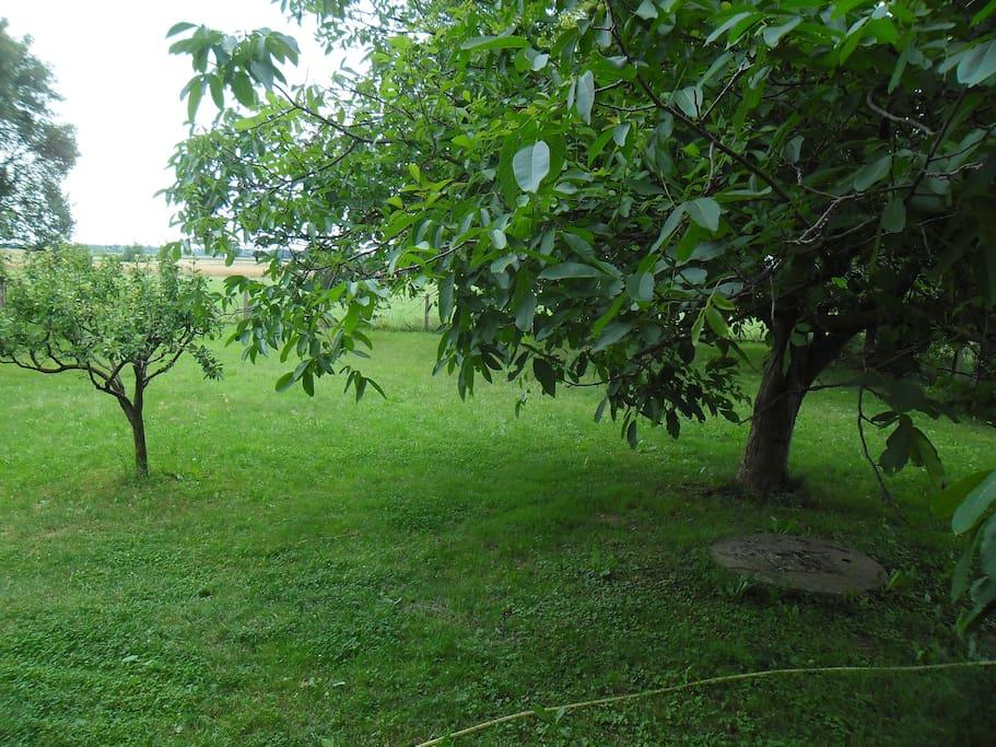 Priroda u vrtu