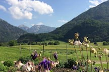Unser Bauerngarten mit Blick auf das Sonntagshorn