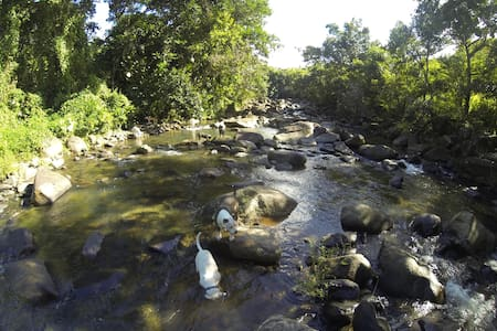 Camping on the river in the El Yunque rain forest - Río Grande - テント
