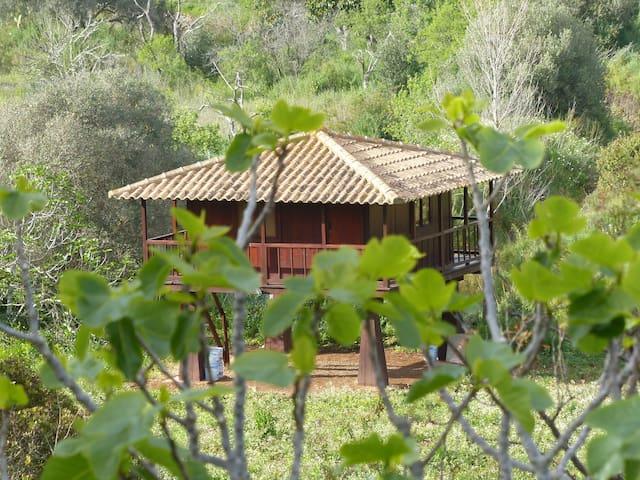 Starling Cabin - Luz - Cabin