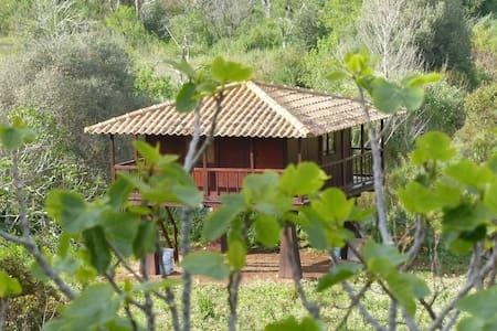 Starling Cabin - Luz
