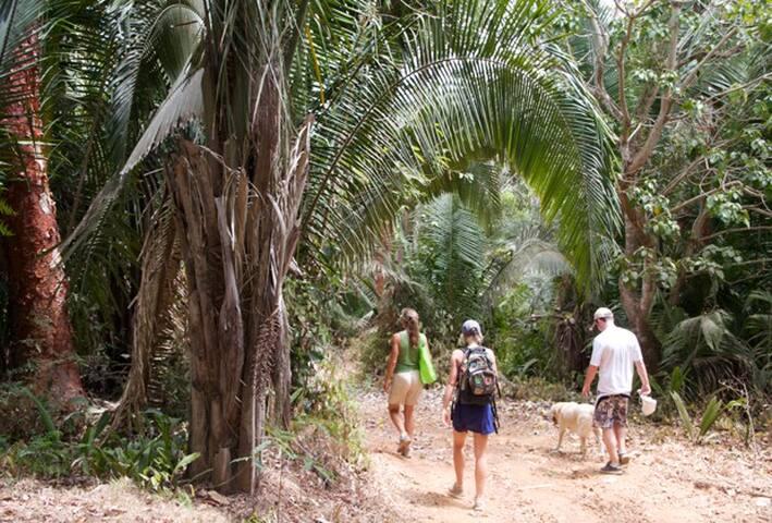 A walk amongst natures giants.