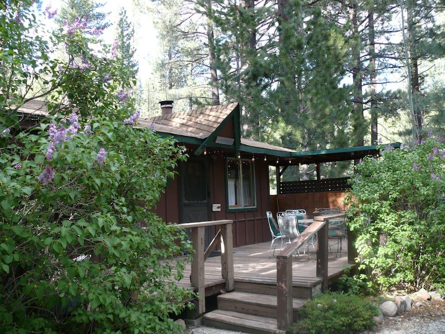 markleeville lilac cottage cozy cabin on creek cottages