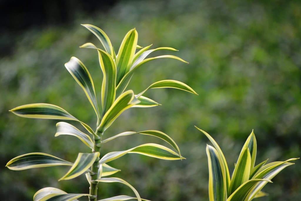 Me gusta sembrar todo tipo de plantas, flores, árboles frutales