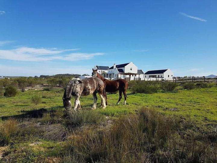 Hunter's Dream Guest Loft Equestrian Estate
