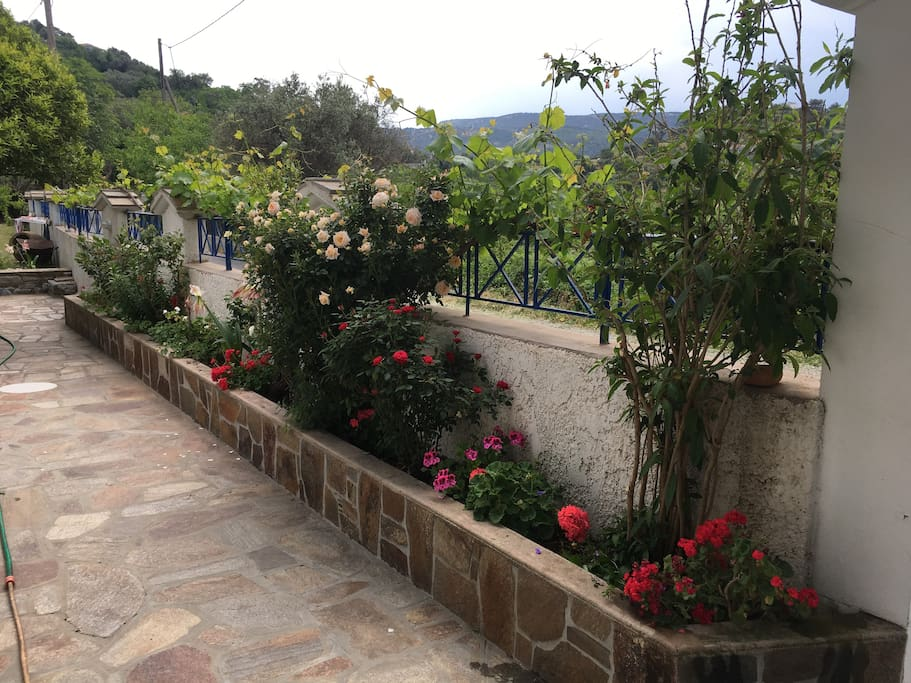 Flowers decorate the paved courtyard throughout the year.