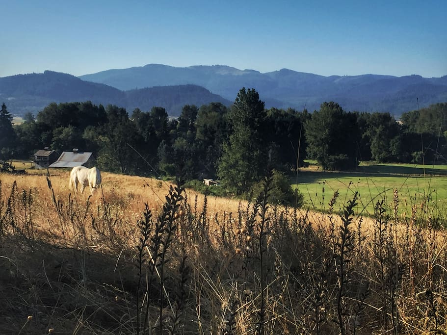 Walk around the ranch, climb up the hill and take in the view of the Willamette Valley.