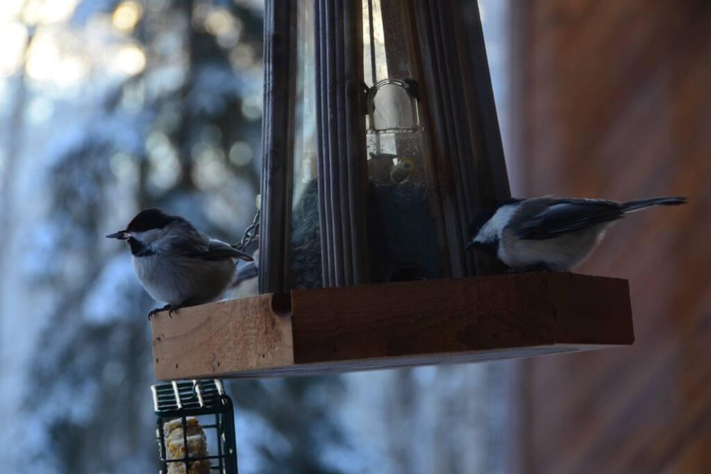 Winter visitors...