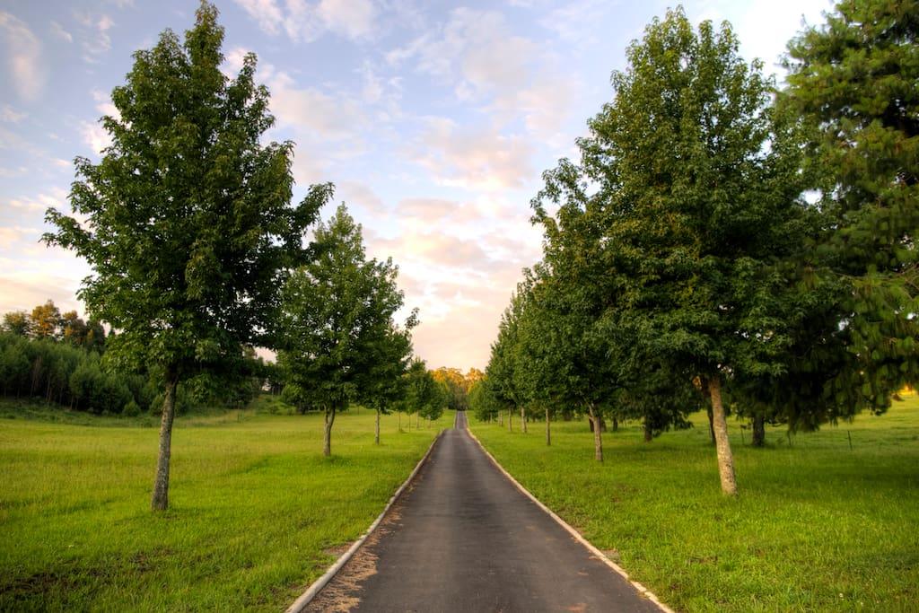 Driveway to Lodge