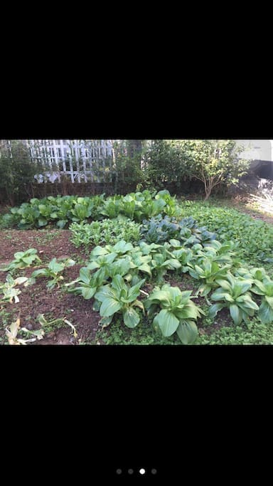 院子里种了点蔬菜,客人可以割点吃吃。