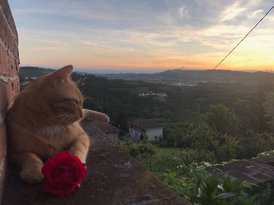Lion & the sunset