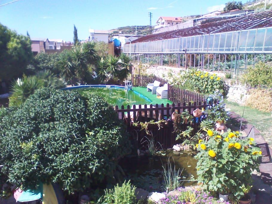 Il giardino. Laghetto con carpe e ninfee