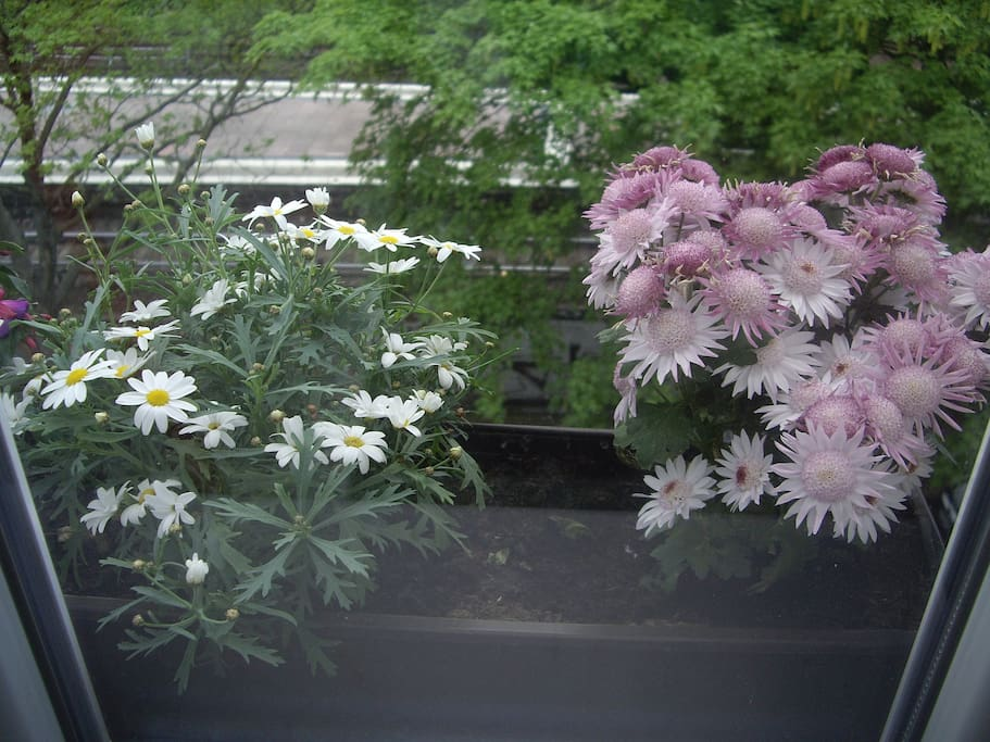 we have also some flowers to take care :) (behind them this is the s-bahn station )