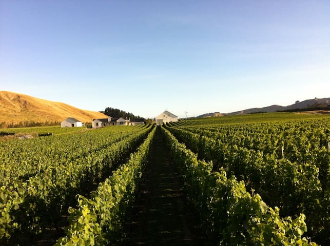 Redbank Estate Vineyard Experience - Martinborough - Daire