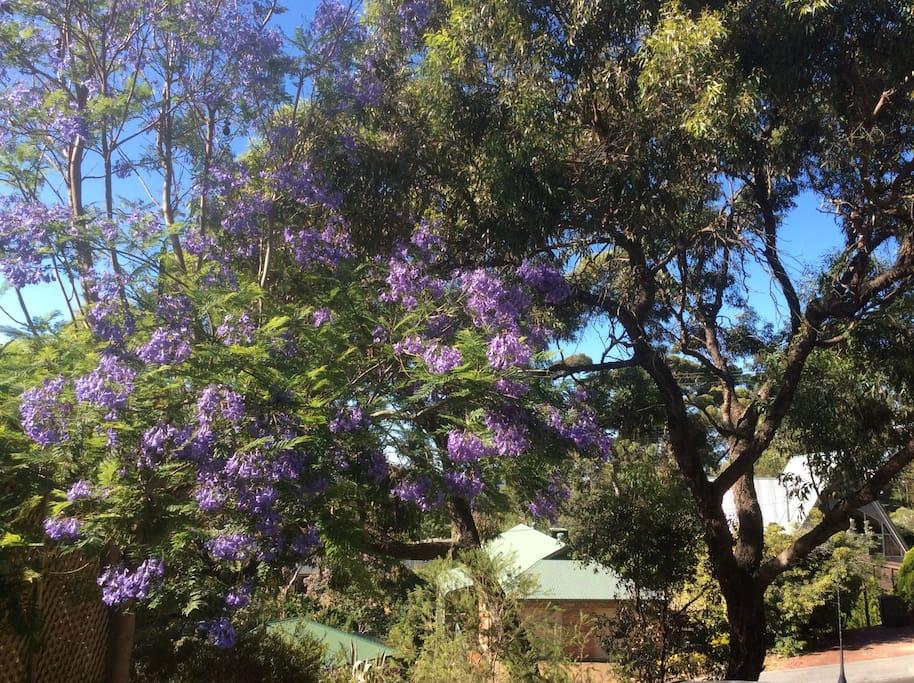 View  from Bedroom 1 Koala Bear likes this tree