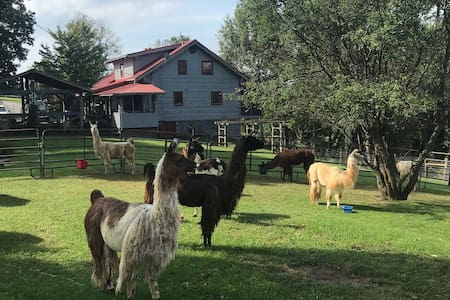 1-2 Bedroom Log Cabin Suite on Working Llama Farm