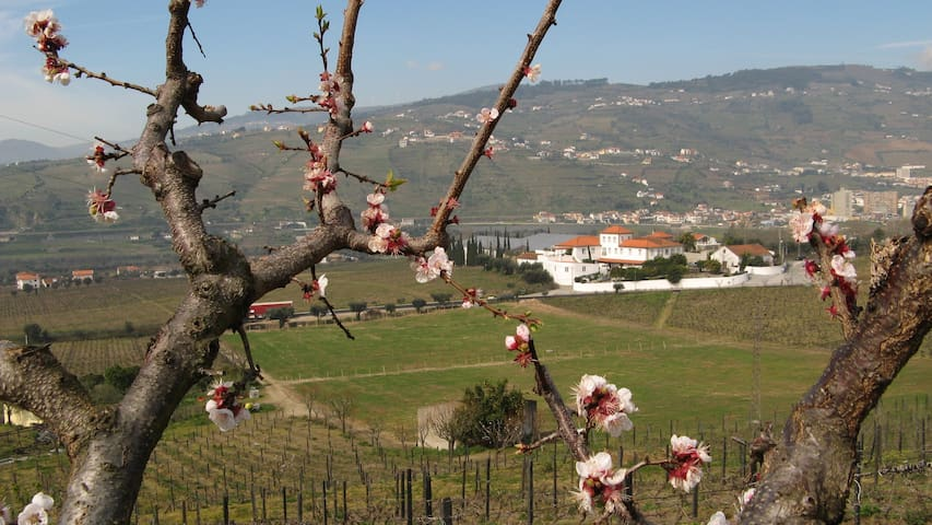 Enoturismo na Região do Douro - Cambres - Bed & Breakfast
