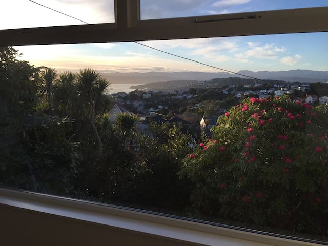 Central Wellington, amazing views!