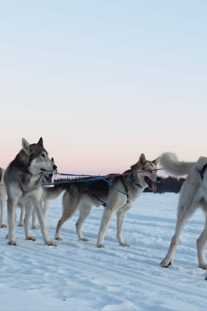 The dog team on the Tanana River