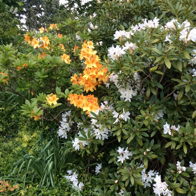 Skøn blomsterflor