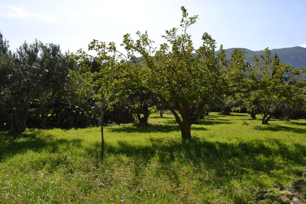 trovate diversi alberi da frutto come questo albero di gelsi bianchi che potrete raccogliere in maggio