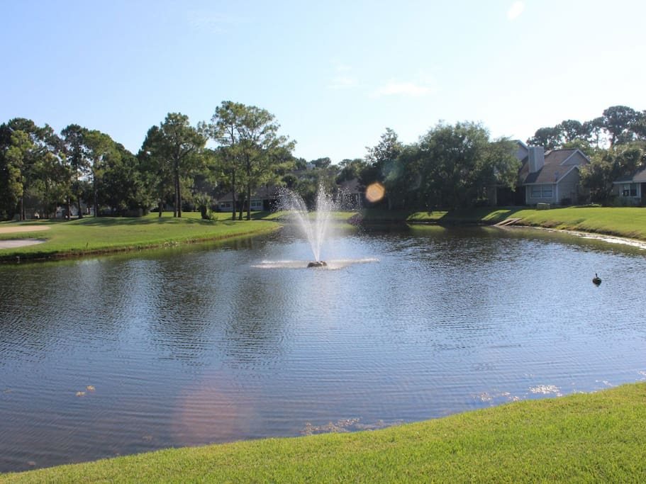 Outdoors,Pond,Water,Park,Field