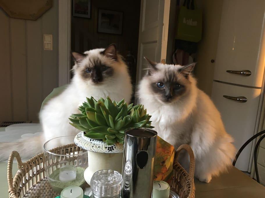 Kattene!
