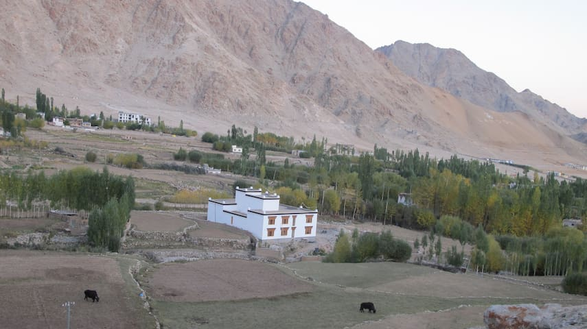 Peace, view, family athmosphere - Leh