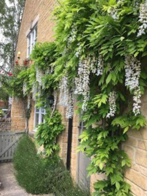 Wisteria, lavender and roses create a fragrant entrance