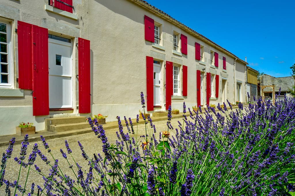 Beautiful property with lovely lavenders.
