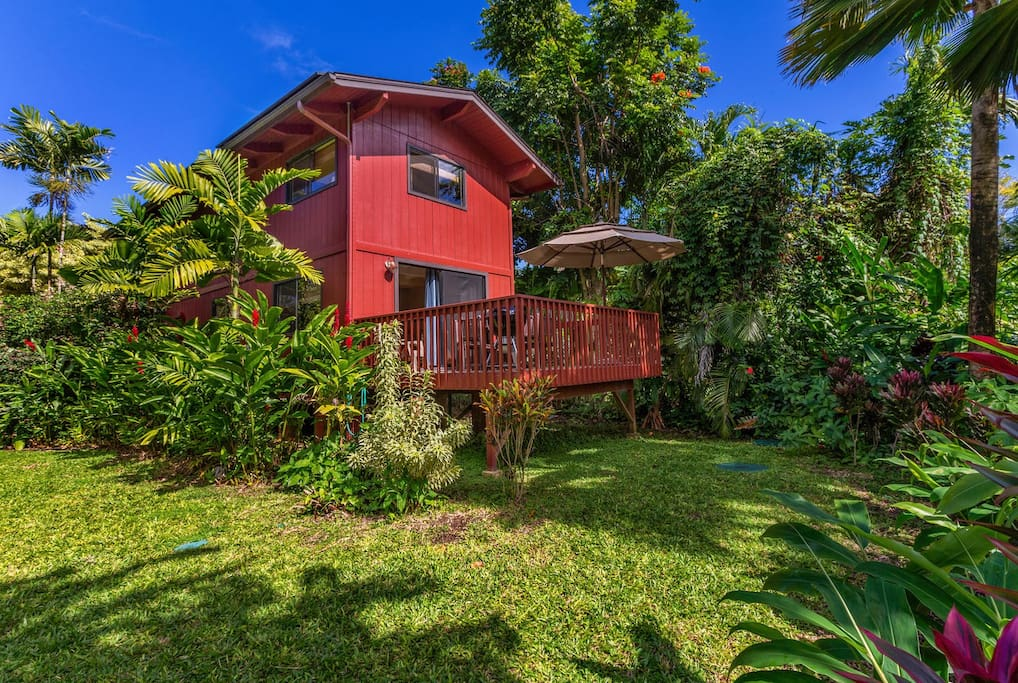 Back of house with lanai and lush backyard.