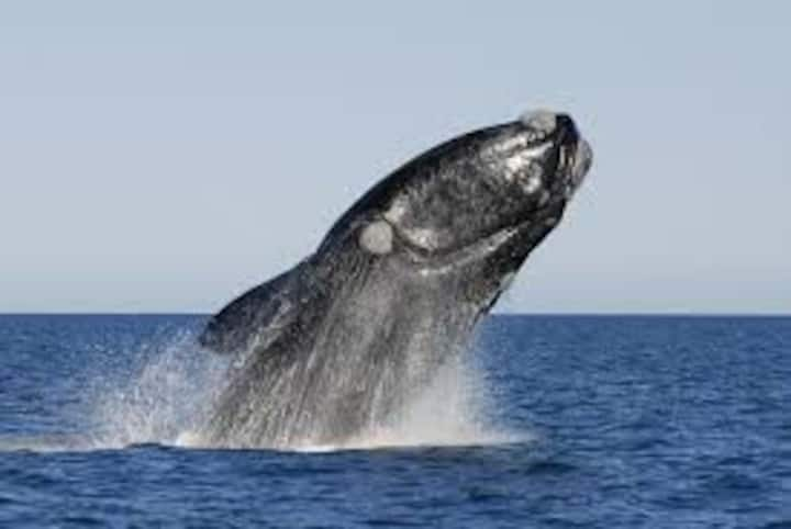 Shelter by the sea |  Watch  Whales all day long