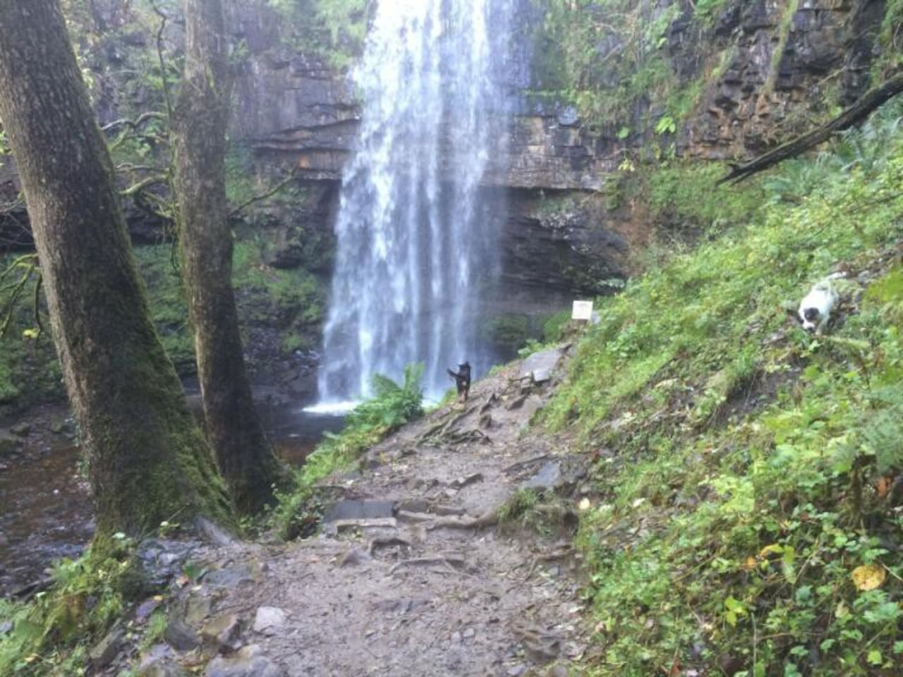 Just 2 minute walk from the house is Henrhyd Falls........beautifull
