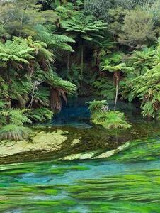 Waihou Lodge-Blue Springs Farmstay - Ngatira
