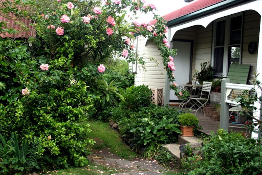 Beautiful old roses reaching to the verandah
