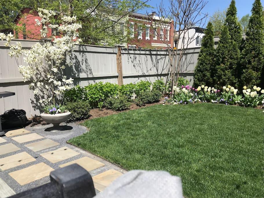 3 season blooms; summer hydrangeas everywhere