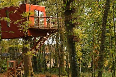 Le Nid Penché - Saint-Amand-en-Puisaye - Dům na stromě