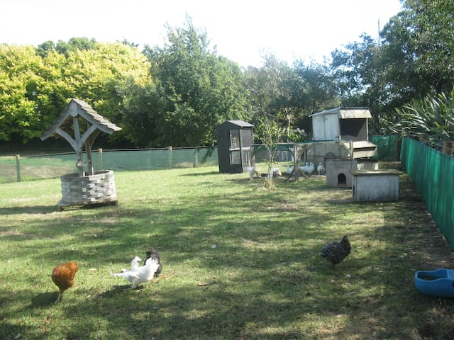 Taurimu Poultry & Farm Stay