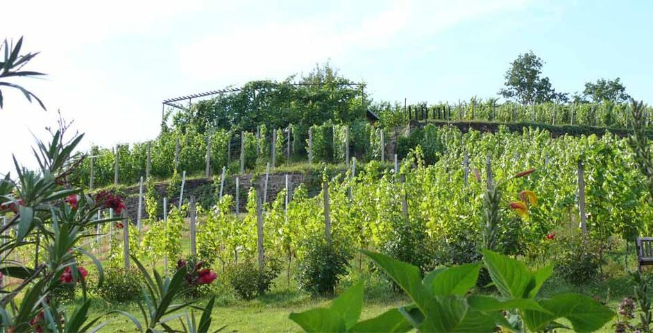 Weingut Mariaberg- Marias Traum - Meißen - Apartemen