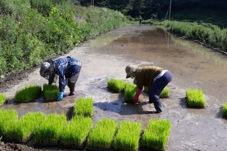 생명이 움트는 쌀(벼농사)집