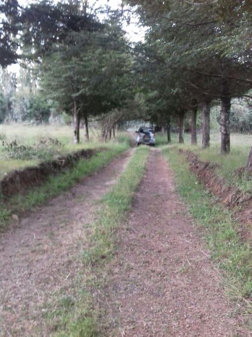 Parte del sitio que resguarda a la propiedad desde la entrada del camino principal