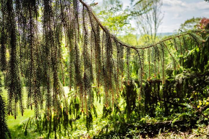 Natur im Garten