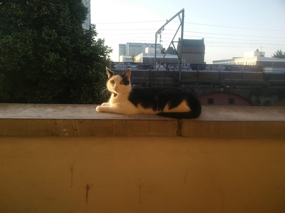 Cat on walkway with view towards Whitechapel
